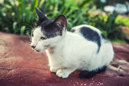 cat feeling sadness sit on the rock at the garden Stock Photo