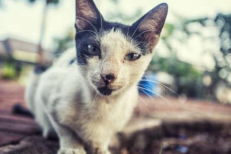 catechism: cute cat smiling close up photo