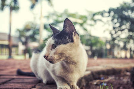 catechism: cute cat close up photo at the garden turn head right Stock Photo