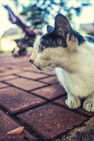 cute cat close up photo side view Stock Photo