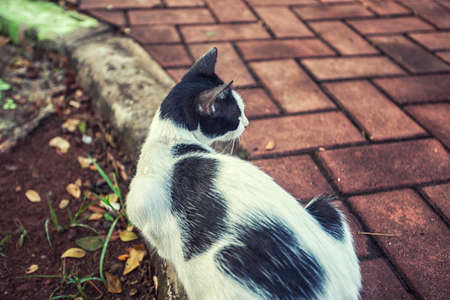 cute cat sit at the garden