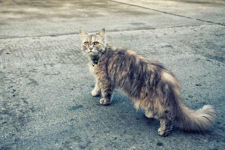 piteous: cat kitty pet Stock Photo