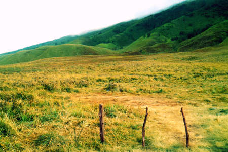 Beauty Scenery of Teletubbies Hill Bromo Stock Photo