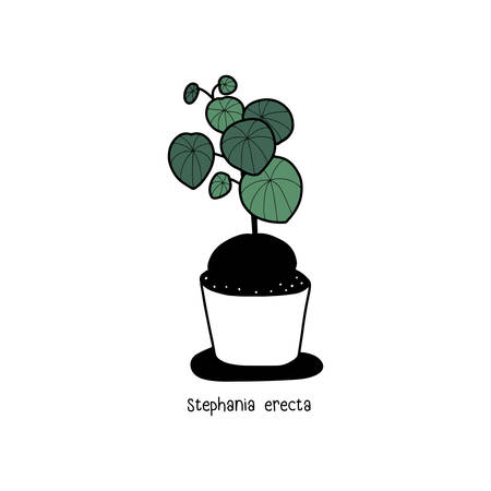 Hand drawn house plants in pots.