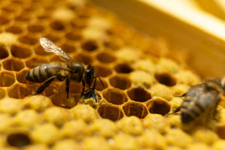The bee was born and comes out of the honeycomb.