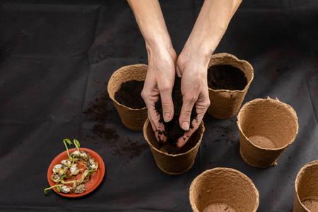 Soil in the hands of women, peat flower pot. Copy space