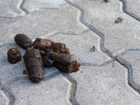 Dog feces lying on the sidewalk. Use the bags to clean the excrement of your Pets. Copy space.