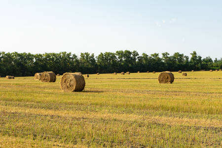 Agricultural field. Round bundles of dry grass in the field against the blue sky. Banco de Imagens