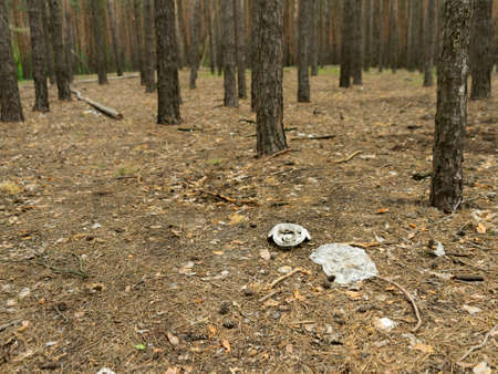 Garbage in forest. People illegally thrown garbage into forest. Concept of man and nature