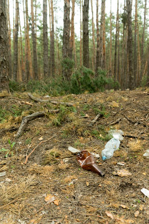 Empty plastic bottle in the form of garbage in the forest thrown by man. The concept of environmental pollution by human life products Banco de Imagens