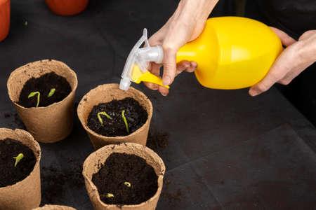 Girl watering seedlings planted in peat pots. Growing seedlings.