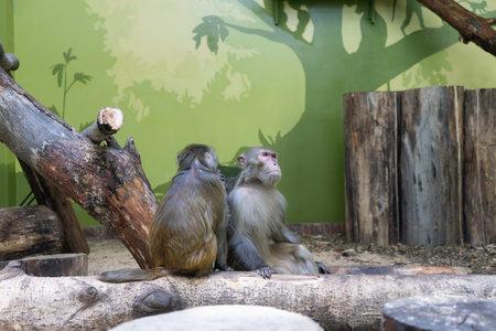 two monkeys sit side by side.