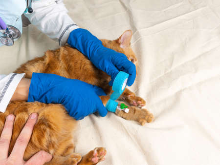 A bright red cat was put on a catheter.
