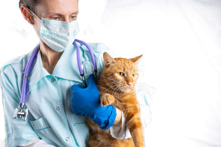 A veterinarian holds a bright red cat in his arms. Animal Health Concept