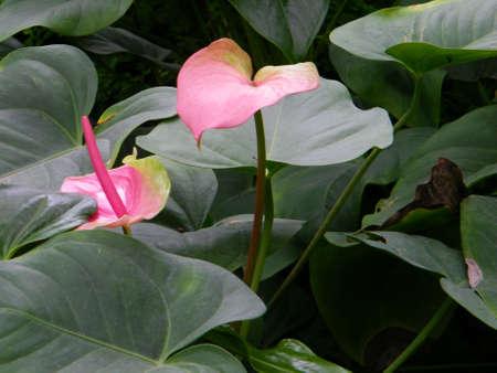 wuhan: Wuhan Botanical Garden4
