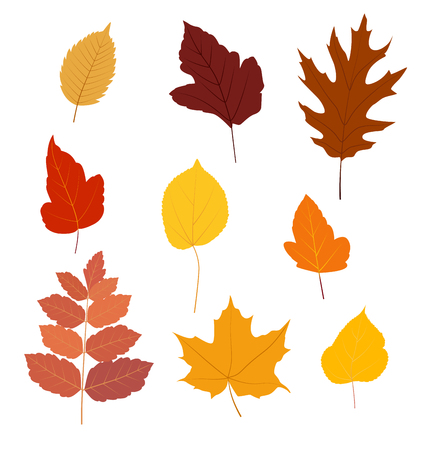 Set of colorful autumn leaves isolated on white background - Vector illustration.