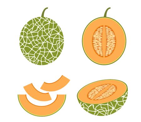 Vector illustration of set fresh Cantaloupe melon isolated on white background