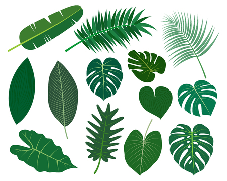 Collection of tropical leaves vector set isolated on white background -  Vector illustration