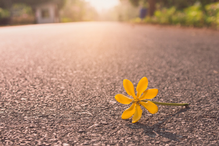 Close up beautiful yellow flower falling on road with sunlight background in the morning. (Selective focus)