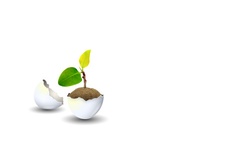 New Life Concept : Little sprout green tree growth in eggshell isolated on white background. Stock Photo