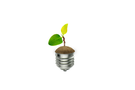 Ecology Concept : Little green sprout tree growth in light bulb.