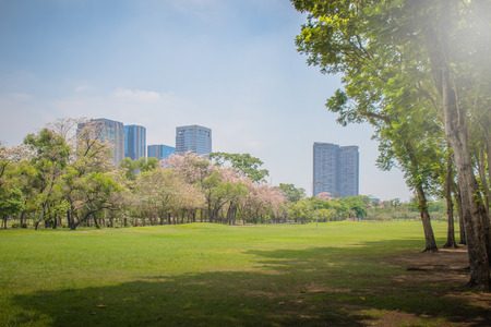 Beautiful of green lawn grass meadow field and trees in public park with city buildings in the background. Stock Photo