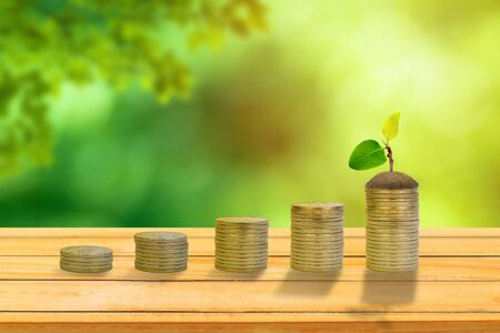 Business Growth Concept : Green sprout tree growing on stack of coins with green trees and sunlight in background.