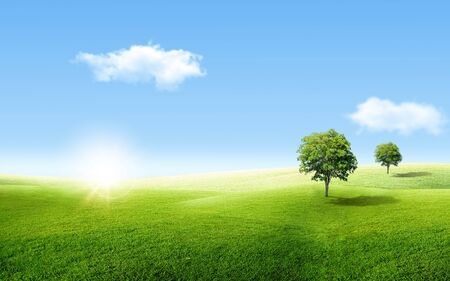 Beautiful landscape view of Alone green tree with grass natural meadow field and little hill with white clouds and blue sky in summer seasonal.
