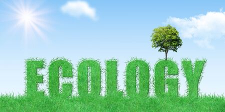 Ecology and Environmental Concept : Green tree growth on ecology grassy text with blue sky in background. Stock Photo