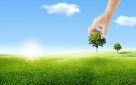 Ecology and Environmental Concept : Hand holding green trees and planting tree on ground with blue sky in background.
