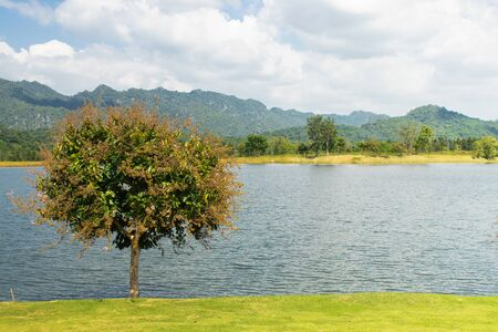 Beautiful landscape of Alone green tree growth on green grass nearly lake with mountain and blue sky in background.
