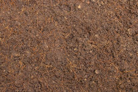 Top view of Brown soil or fertile soil for planting sprout tree in garden. Stock Photo
