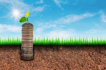 Business Money Growth Concept : Sprout tree on stacked silver coins growth from brown soil with sunlight and blue sky in background.