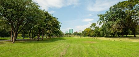 Panorama image of Beautiful of green lawn grass meadow field and trees in public park with city buildings in the background.