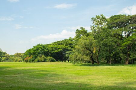 Beautiful of green lawn grass meadow field and trees in public park.