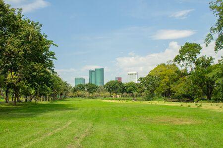 Tropischer Blick auf das grüne Rasengraswiesenfeld und die Bäume im öffentlichen Park mit Stadtgebäuden im Hintergrund. (Selektiver Fokus)