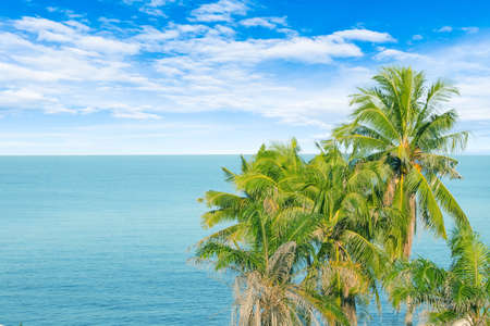 Green coconut trees with seascape view of cloud and blue sky in the background.