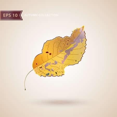 Autumn falling leaves. Leaf fall. Autumn design. Vector illustration Illustration