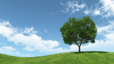landscape with isolated tree on green meadow and blue sky with white clouds photo