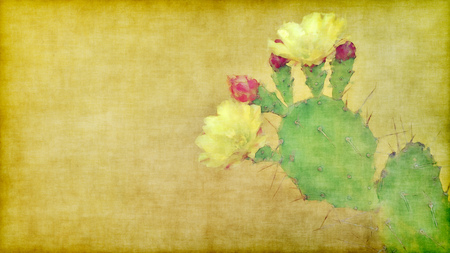 cactus flower: painting with cactus in bloom on grunge background with empty space for text