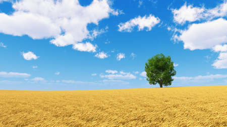 tree isolated: golden wheat field with isolated tree and blue sky