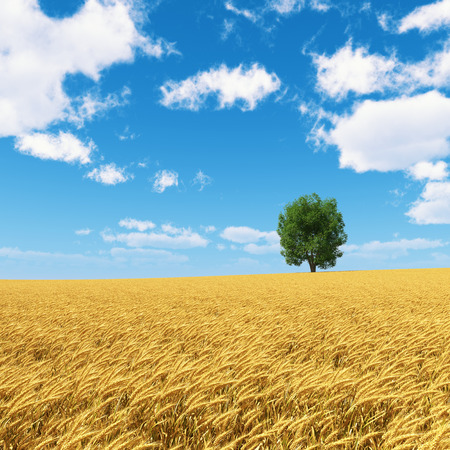 field and sky: golden wheat field with isolated tree and blue sky