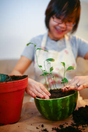 Young girl growing lemon trees indoor, showing a joy of gardening photo
