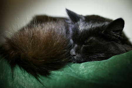 peacefully: Black cat sleeping peacefully on a couch Stock Photo