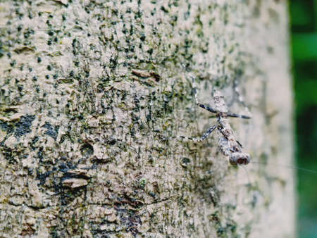 praying mantis hiding on a tree