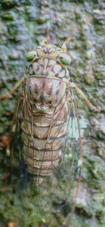 Beautiful Cicada on a tree close up view Banco de Imagens