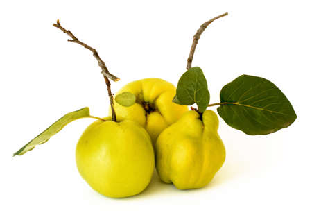 quinces: Quinces isolated on white background Stock Photo