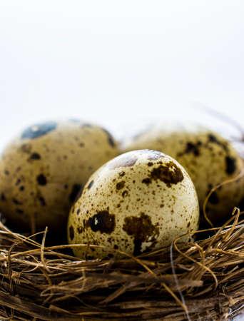 quail nest: Quail eggs in nest macro