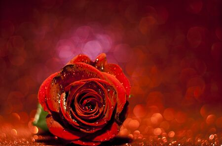 red rose bokeh: Beautiful Valentine rose with love Stock Photo