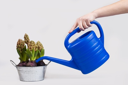 Hand watering a potted flower